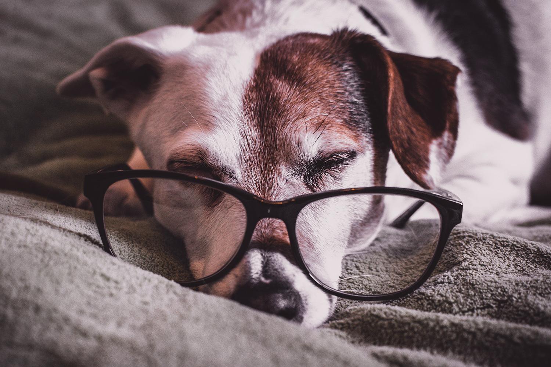reading_dog